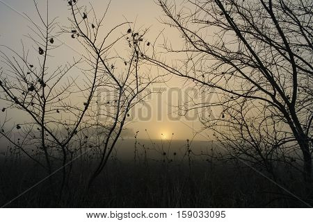 RURAL LANDSCAPE WINTER.Between Apulia and Basilicata: hilly landscape with sunrise in the fog among the bare branches.Italy.