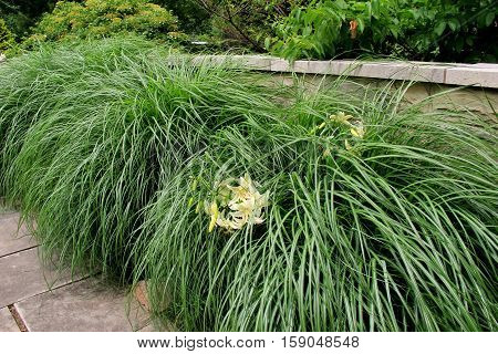 Length of stone wall with long wispy grass and groups of white lilies  tucked inside.