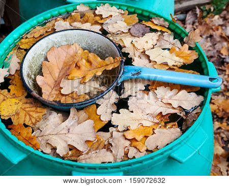 Ladle in barrel with water and oak leaves in autumn