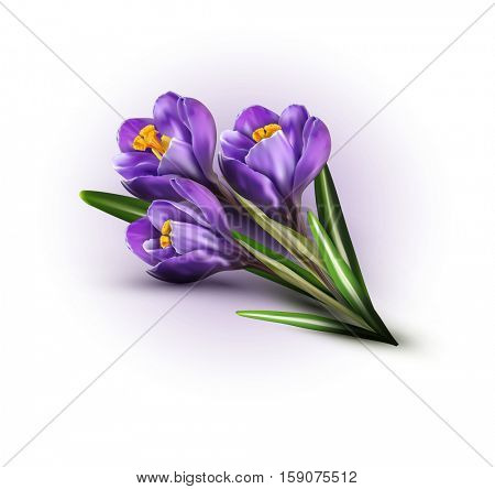 background with blue crocuses