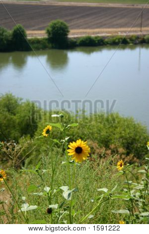 Wildflowers Along The Snake River