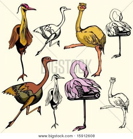 A set of 4 vector illustrations of birds.