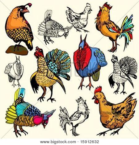 A set of 6 vector illustrations of birds.