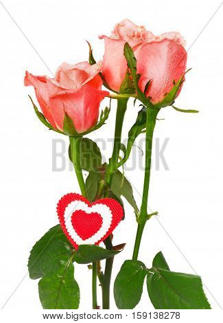 Pink roses and heart on a white background. Three pink roses with drops of water and the red heart from fabric fixed on a stalk. It is isolated on white