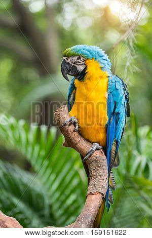 Colourful parrots bird sitting on the perch.