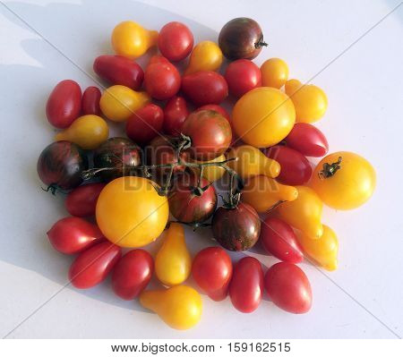 Multicolored various tomatoes included yellows and reds ready for kitchen process