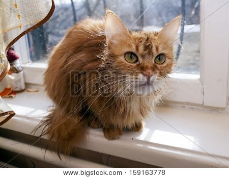Frightened wet haired domestic cat on a window sill