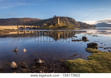 Ducks are foraging during low tide in the water of Loch Duich and loch Alsh with in the background the beautiful Eilean Donan Castle in Kyle of Lochalsh Scotland. Landscape in low evening sun.