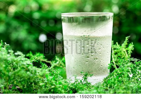 The glass of cool fresh water and condensation droplet on natural green background