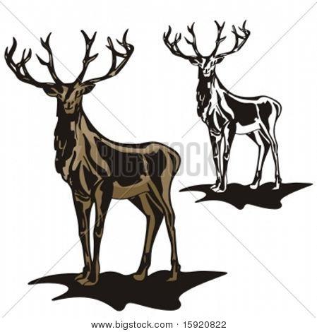 Vector illustration of an elk.