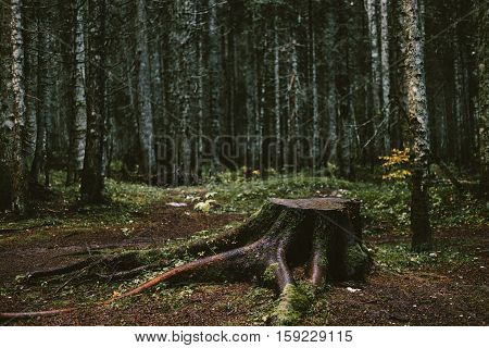 Old Tree Stump In The Autumn Forest. Loneliness Concept