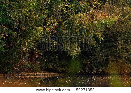 Autumn Foliage In A Deciduous Forest At Edge Of Pond.