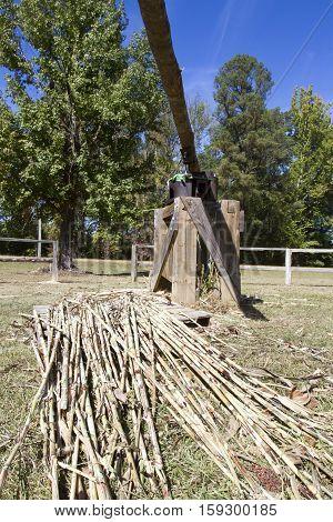 Antique sugar cane mechanical processing tool with raw cane.