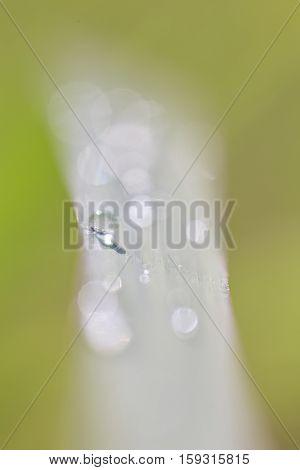 Grass Water Drop #2