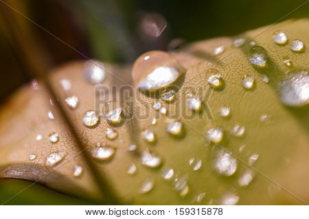 Water Drops On Leaf #2
