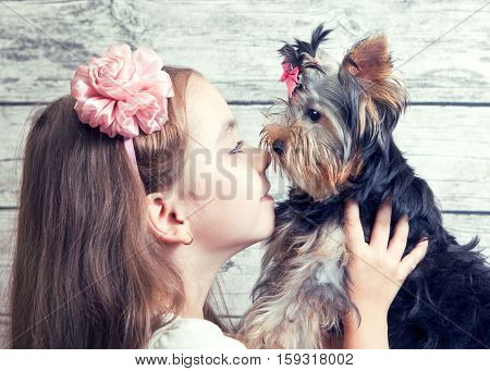 Girl with a Yorkshire Terrier puppy, looking at each other-nose to nose