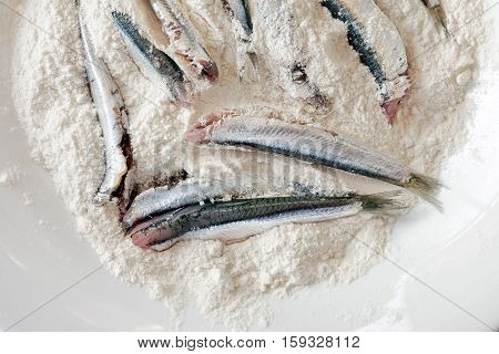 Breaded anchovies clean and ready to be cooked. Anchovies in the dish filled with white flour. To fry in oil.