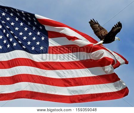 Photo of the American flag with a Bald Eagle flying across it