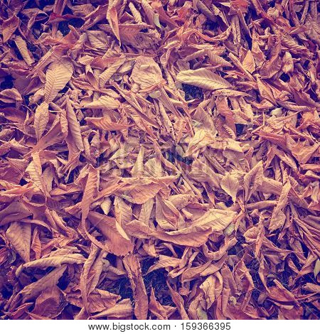 Closeup of dried autumn leaves on ground. Brown, orange and yellow leaves on grass in fall.  Instagram effects.