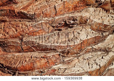 Texture of palm tree bark. Beautiful bark pattern. Close-up.