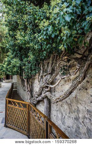 Garden in Khan palace in Bakhchisaray. Crimea