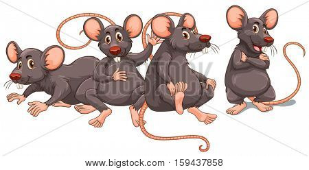 Four rats with gray fur illustration