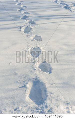 Human tracks on the fresh white snow