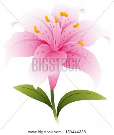 Pink lily with green leaves illustration