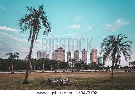 Palm Trees At Villa-lobos Park In San Paulo (sao Paulo), Brazil (brasil)