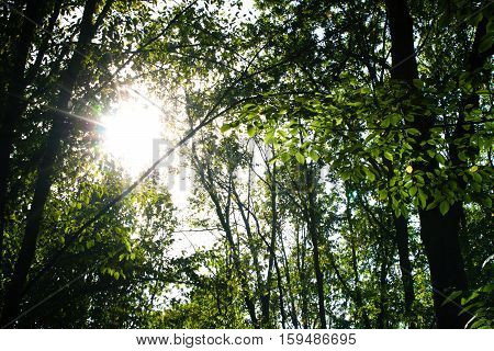 Summer Sunny Forest Trees. Nature background. Vintage photo
