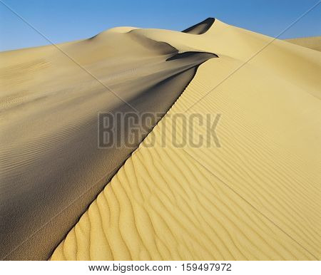 Crest on Sand Dune