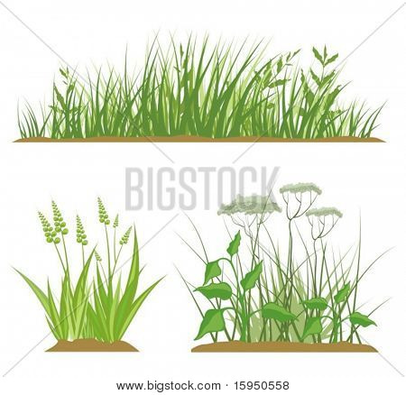 A set of grass design elements, vector illustration series.