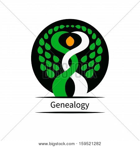 Genealogical research. Vector illustration. Two trees intertwined