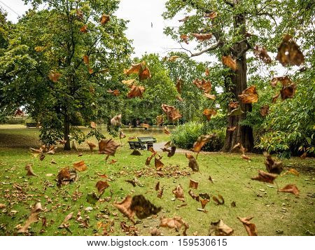 London. Autumn. Fallen leaves on the ground. Yellow leaves on a background of green trees.