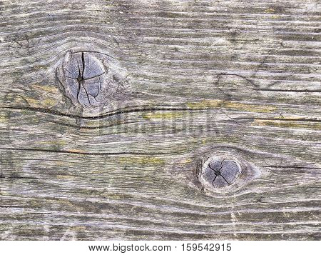 old wood texture. background natural structure panels