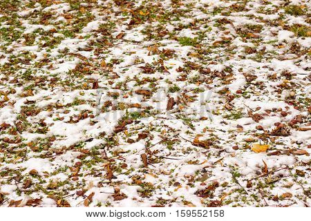 winter autumn background is white snow and fallen leaves from the trees is very nice and bright contrast