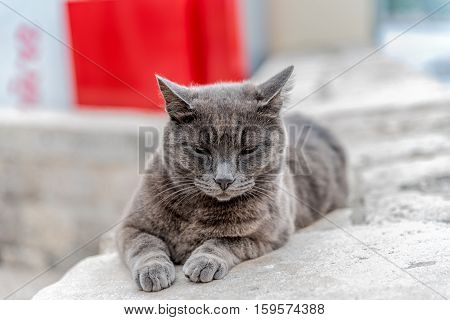 Gray cat with angry look (with selective focus)