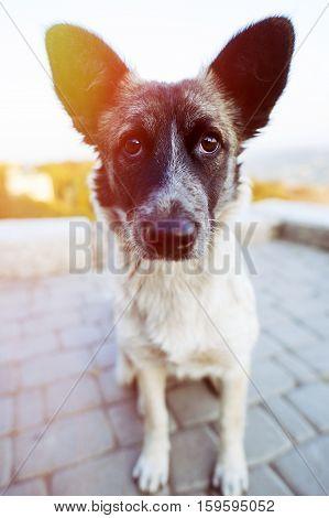 Interesting Homeless Dog