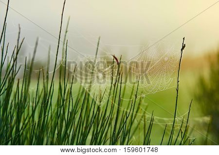 Closeup Of Spider Web On Grass With Dew Drops On It