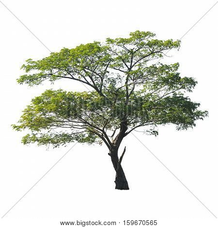 The isolated of tree on white background.