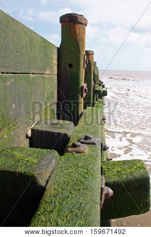 Looking down the length of a wooden breakwater (groyne) covered in green algae on a sandy beach with calm sea lapping against the shore. Blue sky with white cloud as background.