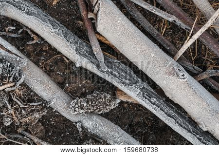 Close-up of dry leaves and grass with hoarfrost background.