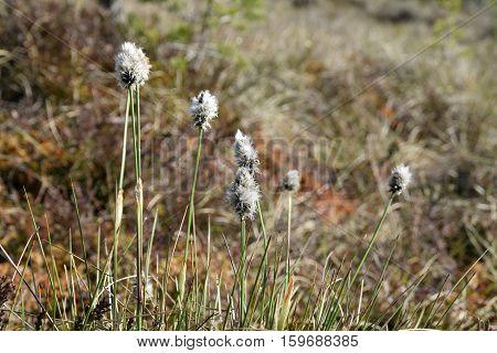 Dry grasses on swamp soil at springtime.
