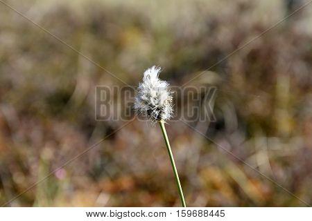 Dry grass on swamp soil at springtime.