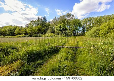 Backlit image with a closed gate in a Dutch nature reserve. It is spring and the spring flowers bloom in abundance.