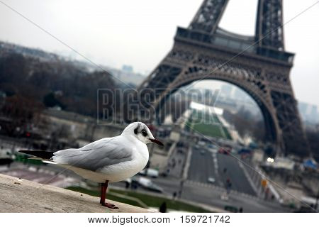 White gull on a background of the Eiffel Tower in Paris