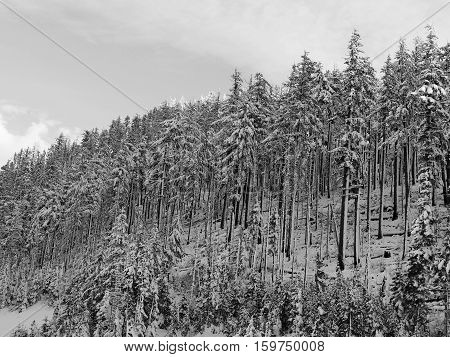 Afternoon light fading into evening and lighting the tips of snow covered fir trees on a winter day in the Deschutes National Forest.