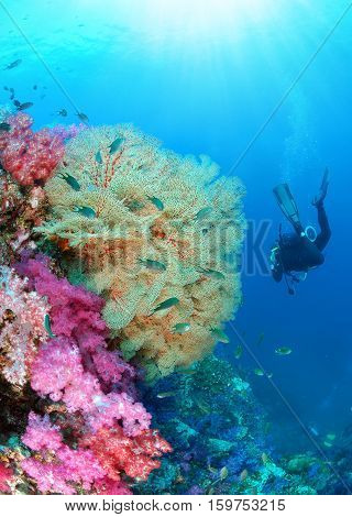 Young woman scuba diver diving pass beautiful gorgonian sea fan and soft coral on a tropical coral reef in clear underwater world with sun rays Similan national park North Andaman Thailand