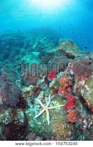 Beautiful seascape with out standing white sea star or star fish on the coral reefs with sun rays underwater of Similan National park North Andaman sea South of Thailand.