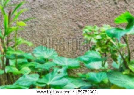 green blurred of nature background / Abstract nature background /Blurred park, natural background / green bokeh natural background / abstract nature background not in sharpness